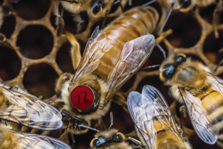 Znalezione obrazy dla zapytania matka pszczela